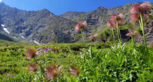 Kapitel 7: Edelfa bestaunt die Bergblumen beim Aufstieg ins Valle Antolina